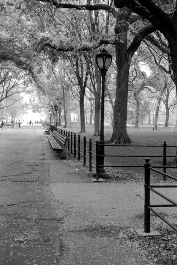 bw-central-park