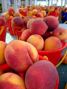 peaches-at-farners-market