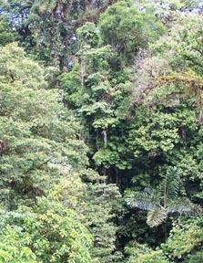 tropical-rain-forest