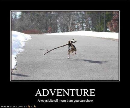 adventure-dog1