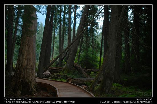 The Boardwalk Trail in Trail of Cedars Glacier Natl Park by Janson Jones
