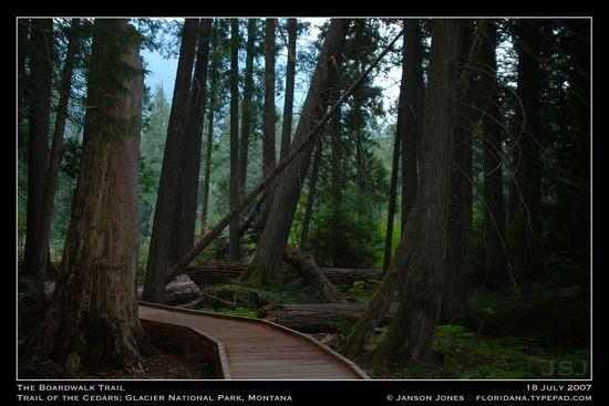 The Boardwalk Trail in Trail of Cedars Glacier Natl Park by Janson Jones