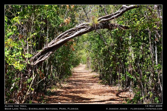 Bear Lake Trail Everglades Fl by JJ