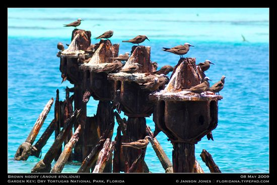 Brown Noddy Garden Key by JJ