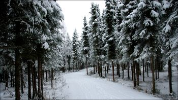 December Snow Anchorage by JJ