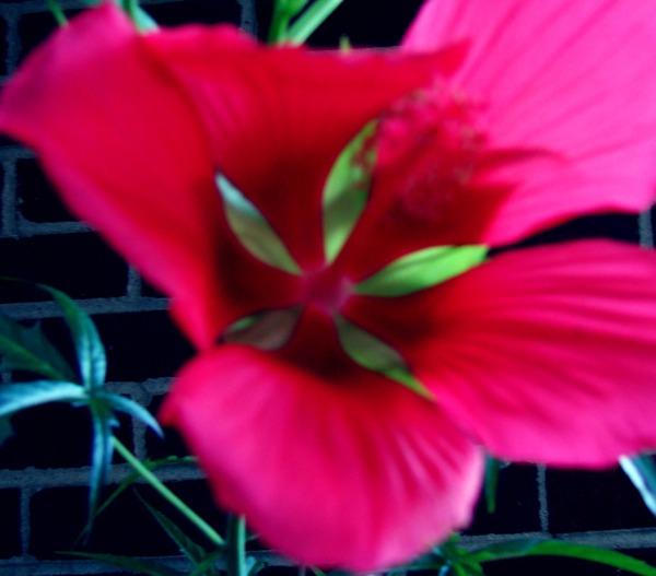 Heart Petals by L