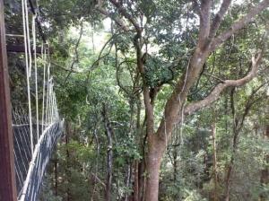 Hanging Bridge Taman Negara National Park Bridge, Malaysia