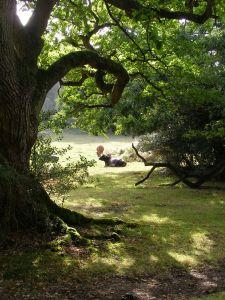 Alongside Shepherd's Gutter, Brook Wood, New Forest, UK, by Jim Champion (WC)