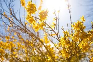 Spring in London by miemo pettinen (FCC)