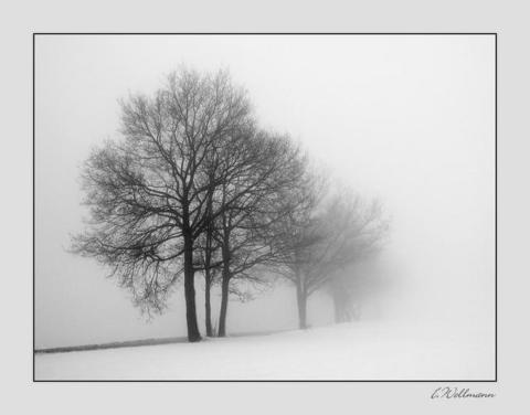 Winter Solitude by Ilona Wellman