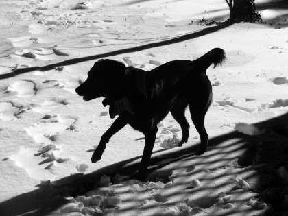 Chiaroscuro colon dog and snow