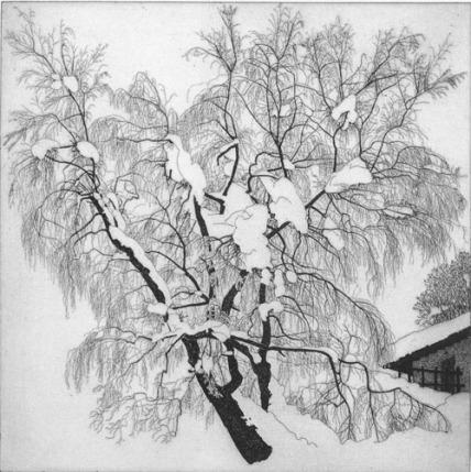 Federica Galli 1996 albero gelato al pian delle betulle