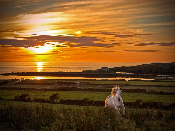 Horse at Porth Cwyfan, Anglesey, Wales by Karen Ann Jones Telegraph Big Picture