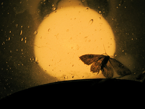 Moth Light by beinggreen