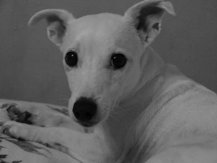 Alfie Portrait in Black and White
