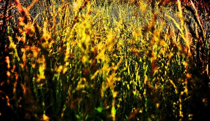 Fields of Gold FCC Walt Stoneburner