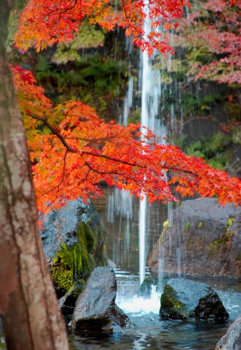 Autumn in Kyoto by Daily Picture FCC