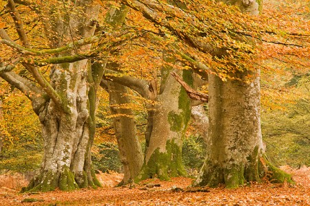 Autumn in the New Forest by MarilynJane FCC