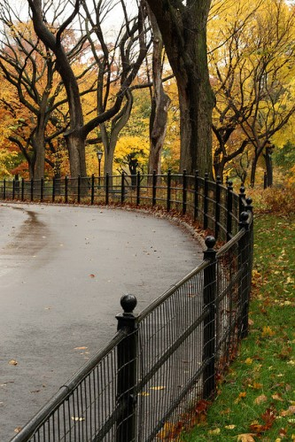 Fall Foliage in Central Park2 NYC by Alakan Dude FCC