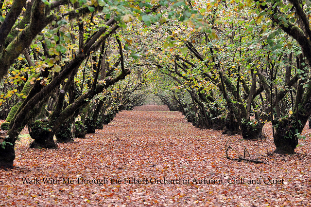 Autumn in the Orchard by Russel Tomlin Flickr