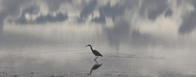 Heron Reflection by NullSynapse FCC