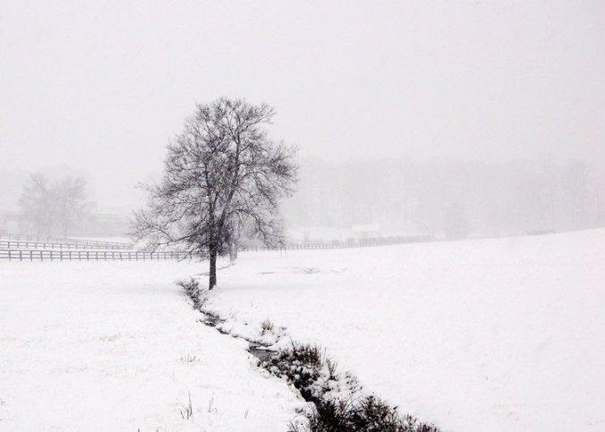 Winter Tree by fdtate fcc