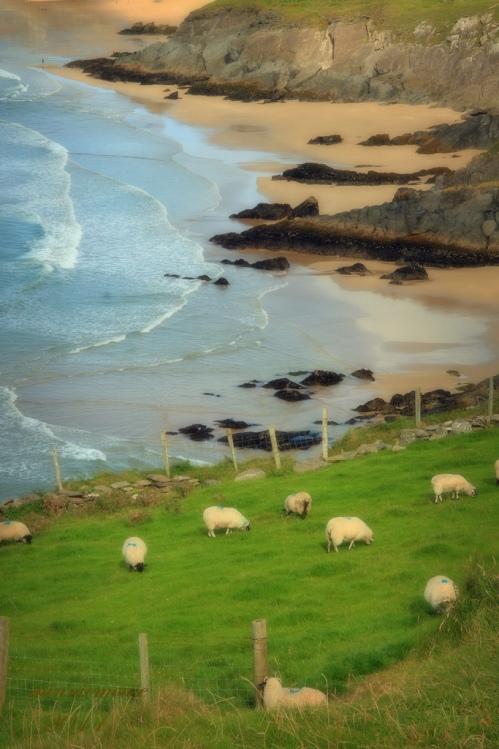 Irish Cliffs minniemouseaunt FCC