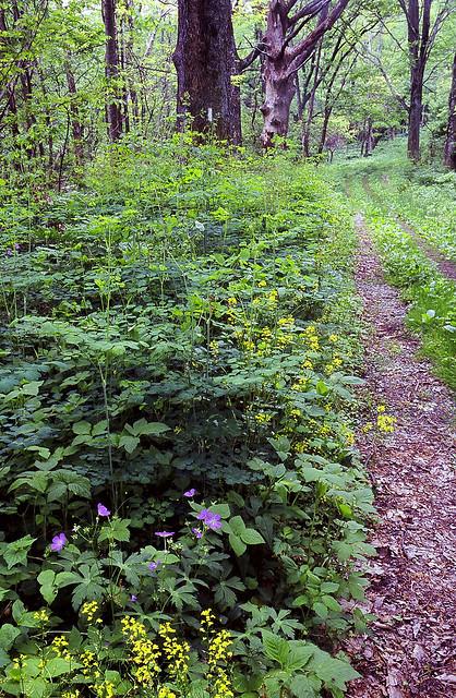 Shenandoah Appalachian Trail by wanderingYew2 fcc
