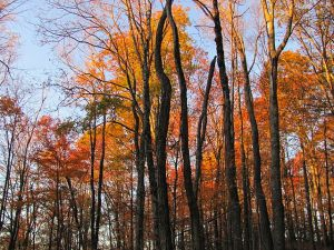 Mount_Sterling,_North_Carolina_Fall_Foliage