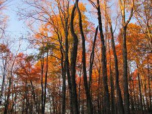 Mount_Sterling,_North_Carolina_Fall_Foliage