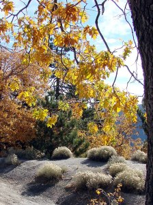 San_Bernardino_Mountains,_Big_Bear,_CA_(5808766463)