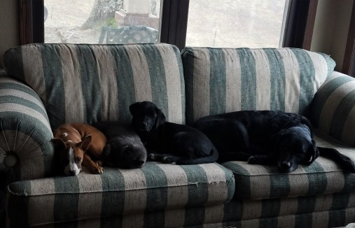 Three dogs and a cat: afternoon naps
