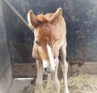 Newborn Annie